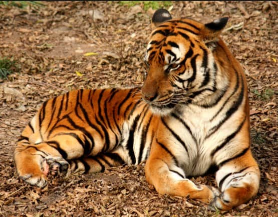 Best Places To Visit In Chennai Within 200 Kms: Annamalai Tiger Reserve